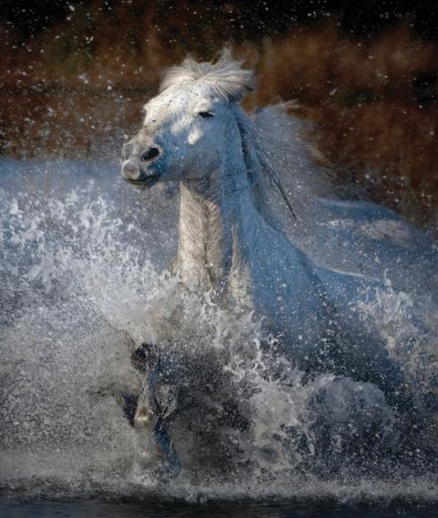 Fototapete Camargue-Pferd EV1358