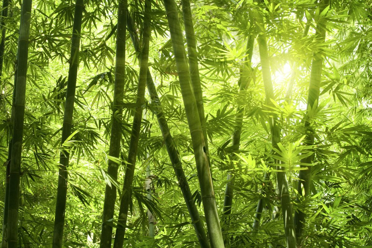 high-quality wallpapers and fabrics | photo wallpaper bamboo forest