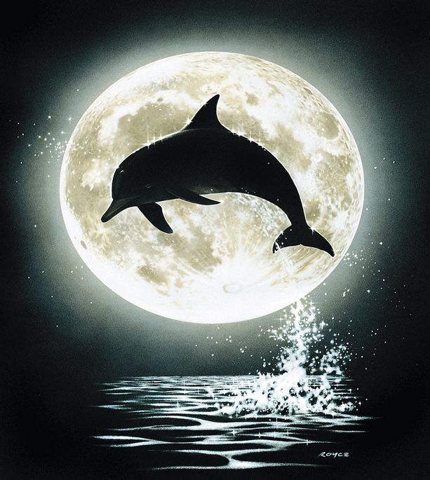 Besondere Tapeten G?nstig : Decowunder Tapeten Fototapete Delphin Mond EV1351 g?nstig online